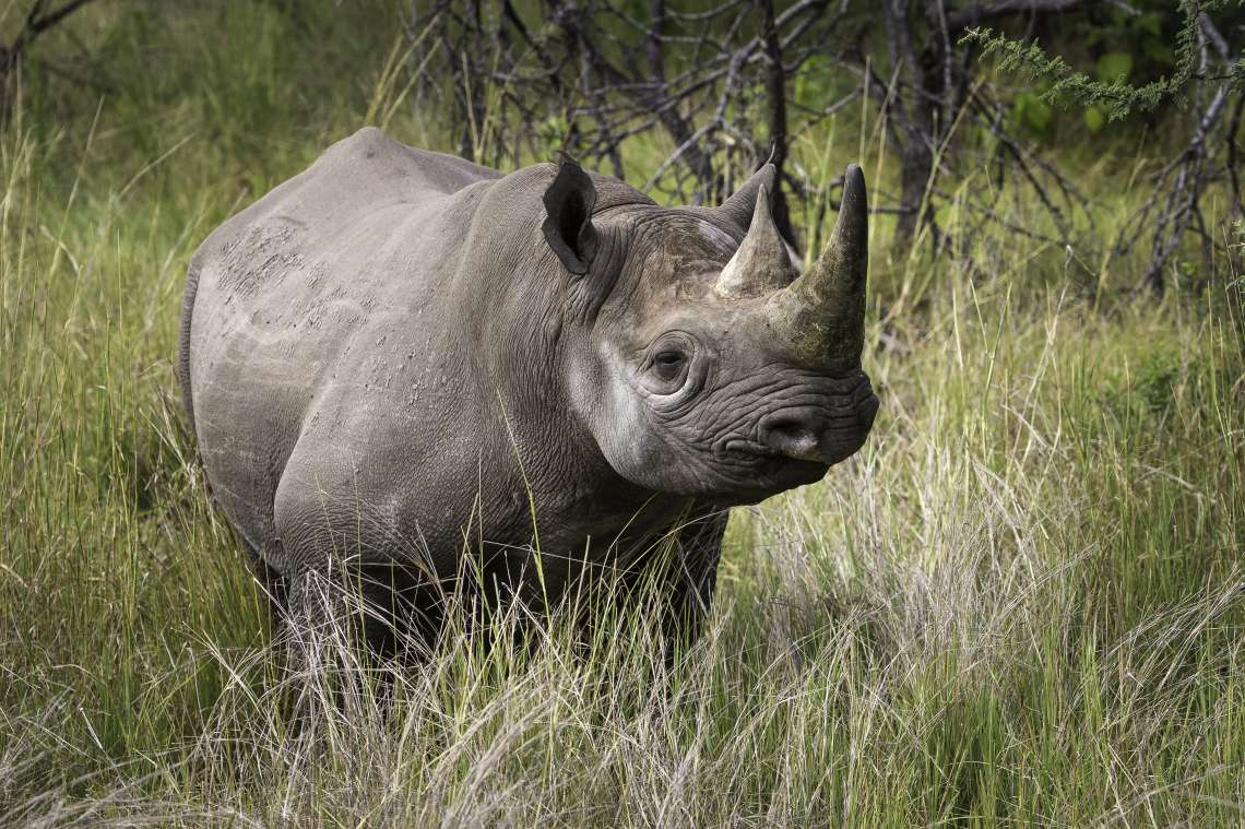 Rhino Conservation Safari
