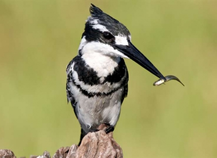 Kenya Bird Enthusiast Safari