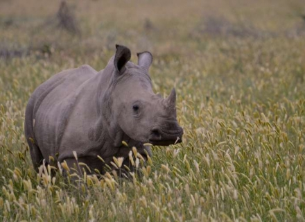 Luxury Rhino Conservation Safari - northern Kenya