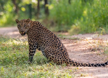 An Introduction to Wildlife of Central India - Tadoba, Pench and Satpura