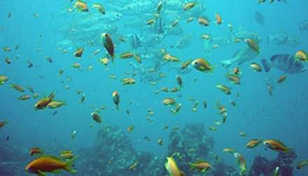 Mozambique Diving