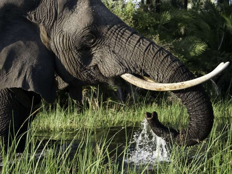 Best Of Zambia And Zimbabwe With Wilderness Safaris
