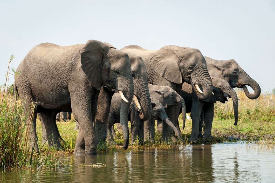 12 Night Malawi Conservation Safari - Wildlife, Tea Estates and Cichlids