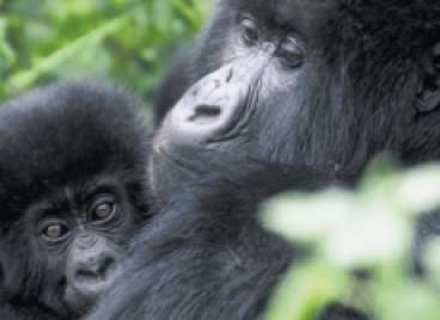10 night Lakes, Mountains and Gorillas - Uganda And Rwanda