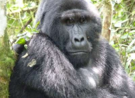 3 Night Uganda Gorilla Safari Tailor Made