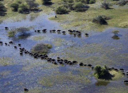Vumbura Plains - Kwedi Concession - Okavango Delta