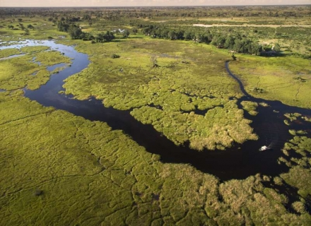 Duba Plains - Kwedi Concession - Okavango Delta