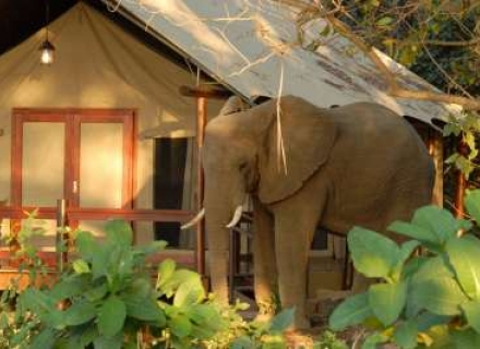 Lugenda Wilderness Camp - Niassa Wildlife National Reserve