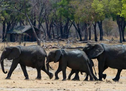Davidson's Camp Hwange National Park