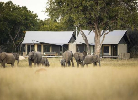 Linkwasha Camp Hwange National Park