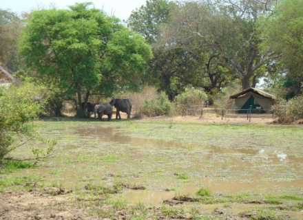 Flatdogs Camp - South Luangwa National Park