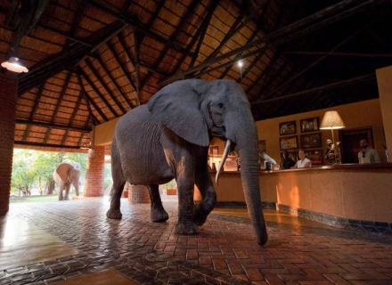Mfuwe Lodge - Mfuwe - South Luangwa National Park