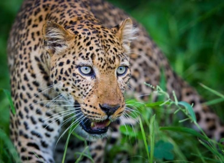 15 Night Wild Zambia - Kafue, South Luangwa and Lower Zambezi National Parks