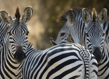 10 night South Luangwa Mobile walking Safari and Camps