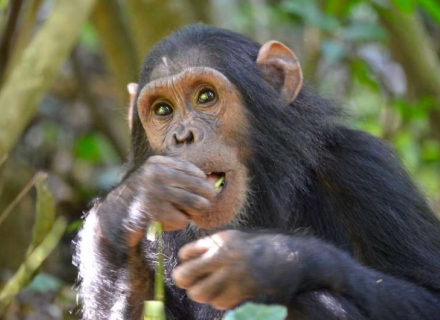 11 night Rwanda - Gorillas, Chimpanzees and The Big 5