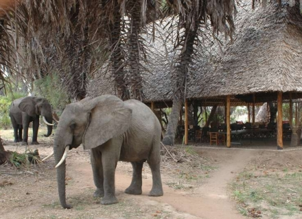 Lake Manze Tented Camp - Selous Game Reserve
