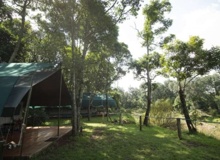 Governors' Private Camp - Masai Mara Reserve