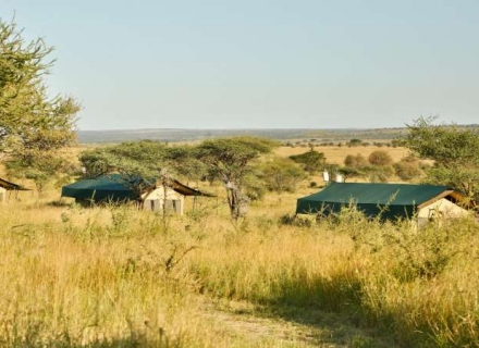 Kiota Camp - Central Serengeti