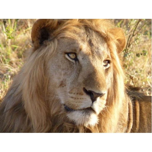 10 Day Kafue National Park And Victoria Falls