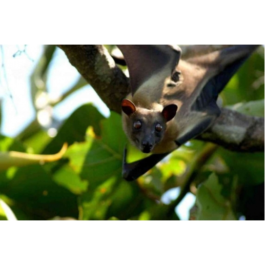 7 Night Kasanka Bat Small Group Safari
