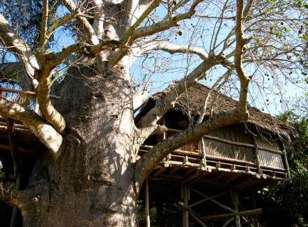 African Tree Houses