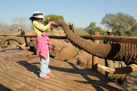 Livingstone and Vic Falls Activities